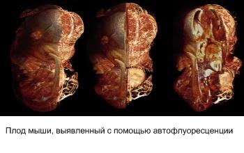 untitled4_5_ru